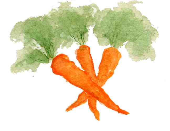 Carrots low
